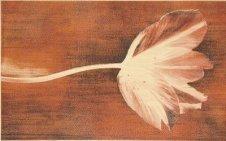 Zdjęcie Prada /preda Kwiat A Marrone/beige Dekor 40x25