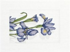 Zdjęcie Polcolorit Sukces Irys Azzurro Dekor 3x25