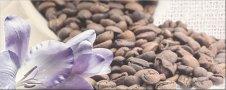 Zdjęcie Centro Penne Coffee 1 20x50